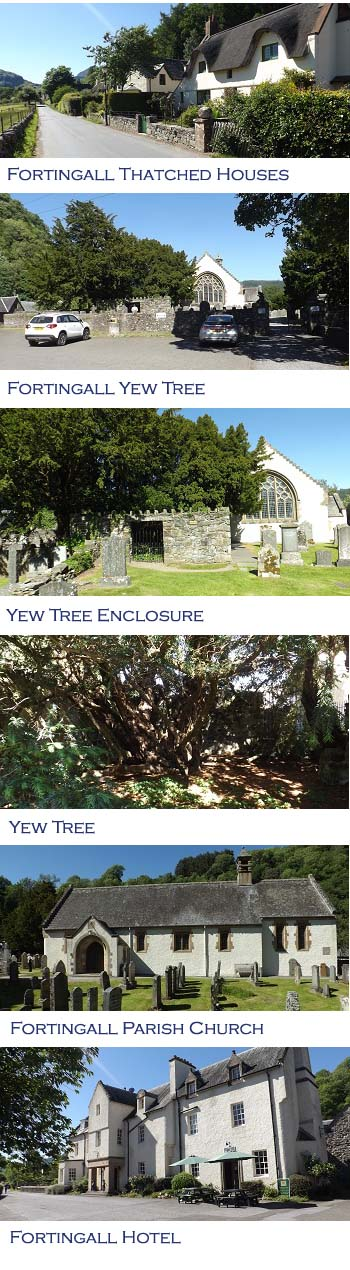 Fortingall Yew Tree Photos