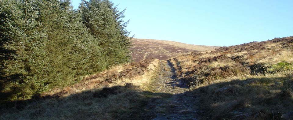 Cairnsmore forest image